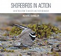 Shorebirds in Action Cover